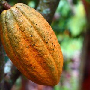 cocoa-1529746__340