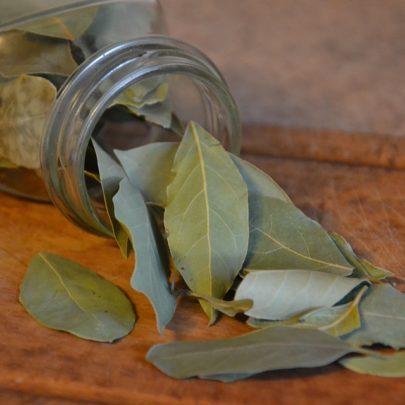 laurier feuilles bocal