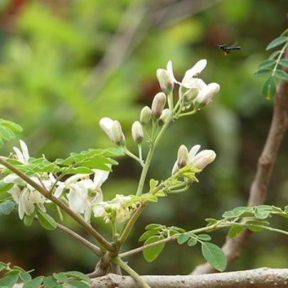 blossom-3474906__340